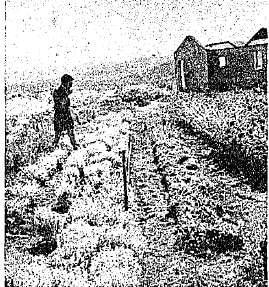 Amirm 1959 (1)