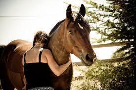 פעילות עם סוסים באמירים